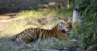 Kanha Nationalpark