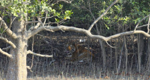 Sundarbans Nationalpark