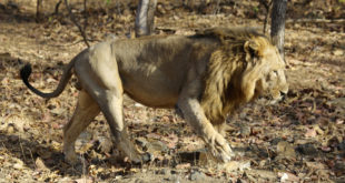 Sasan Gir Nationalpark